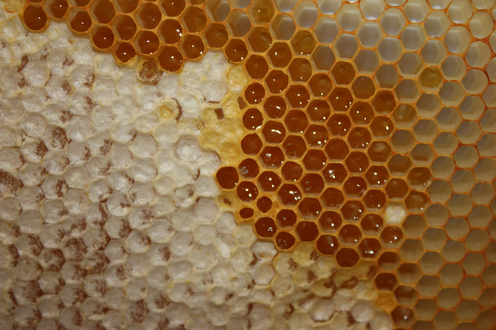 What to do with uncapped honey - Honey Bee Suite